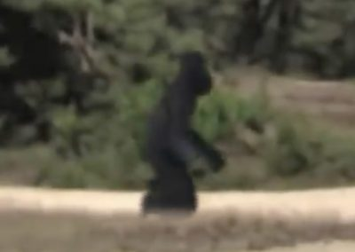 REAL Bigfoot caught on cam during military exercise in Holland!